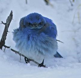 A Blue Bird Twitter