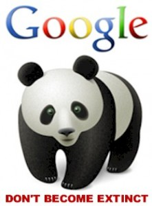 the google panda update