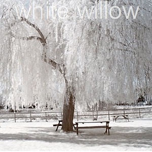 using white willow extract