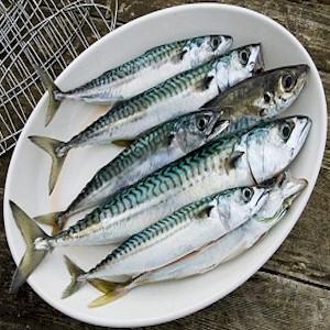 fresh fatty fish to elevate mood